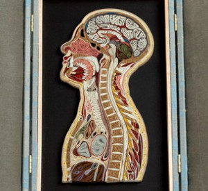 paper art of the human anatomy